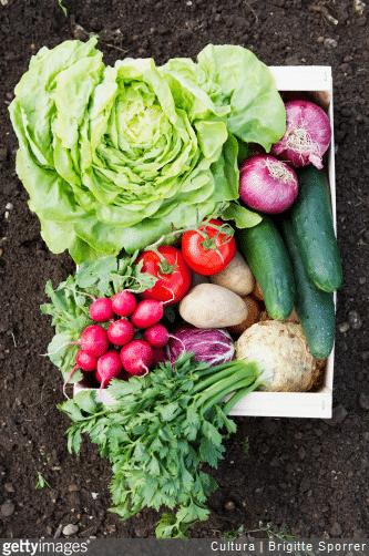 Commencez par planter des légumes et des herbes aromatiques faciles d'entretien.