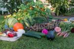 Alimentation bio : comment entretenir son jardin potager